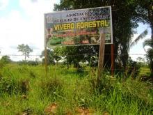 Reforestation Billboard